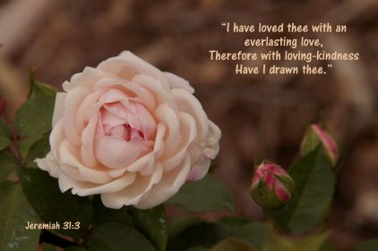 JeriAnne's image of a Rose & Jeremiah 31:3