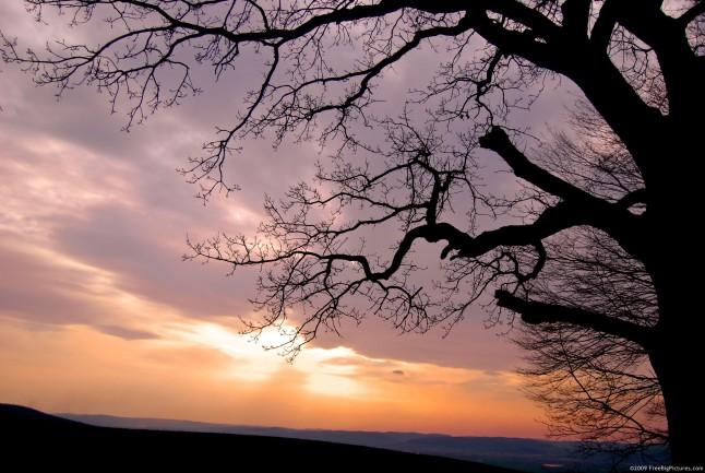 image of sundown and tree