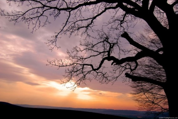 image of sundown and tree