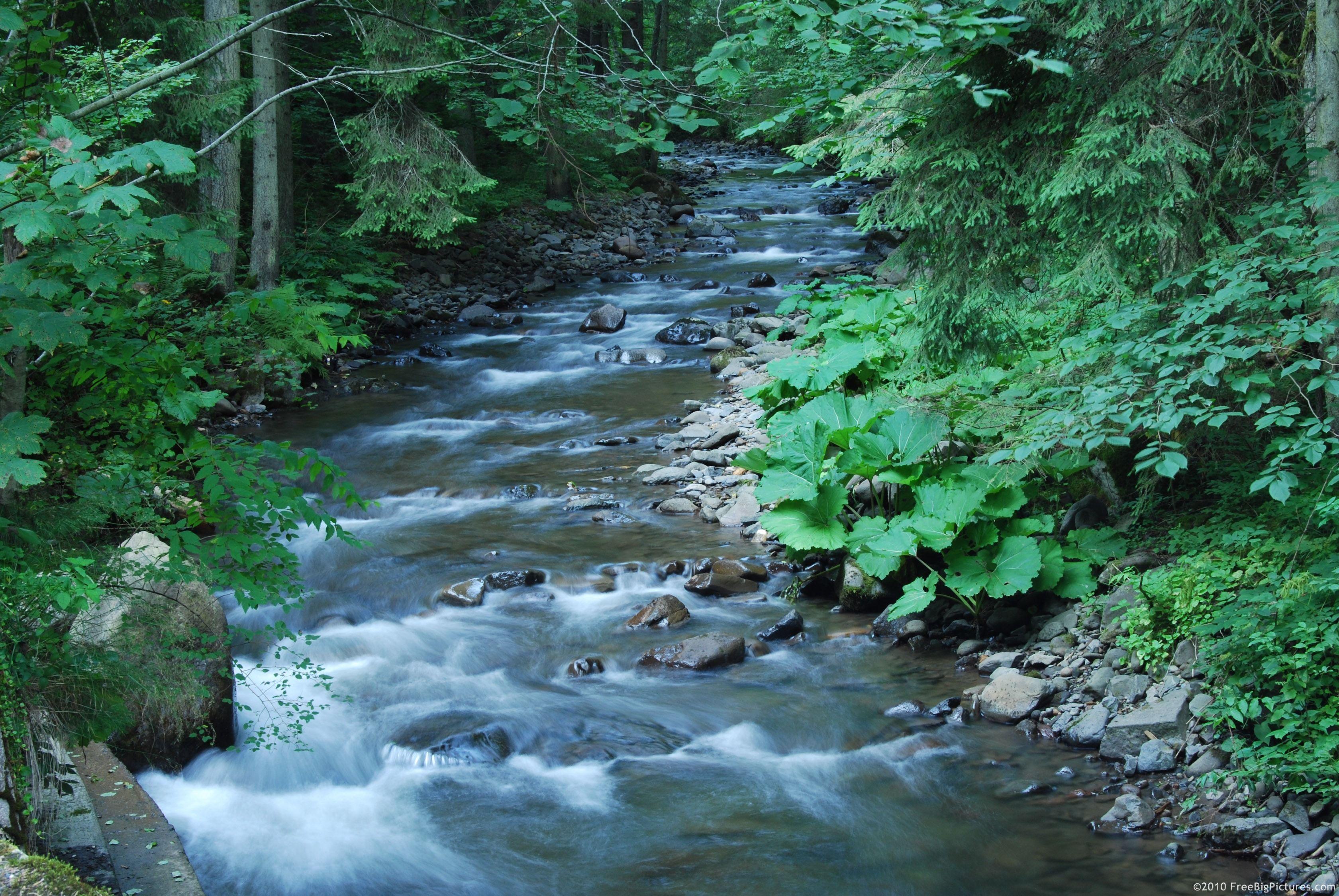 image of woodsy creek