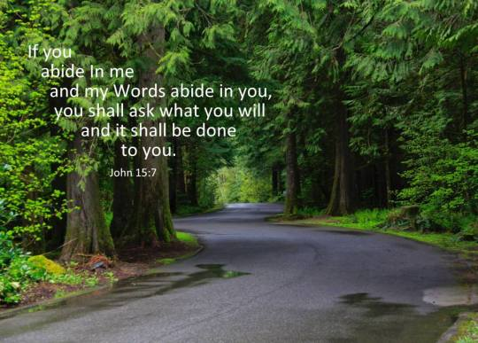 Promise Power image of road through Woods & Jn. 15:7