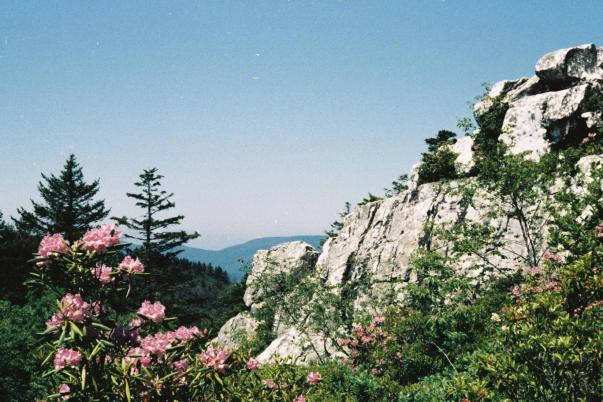 Shining rock with flowers