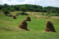 Haystacks-on-Meadow-230x153